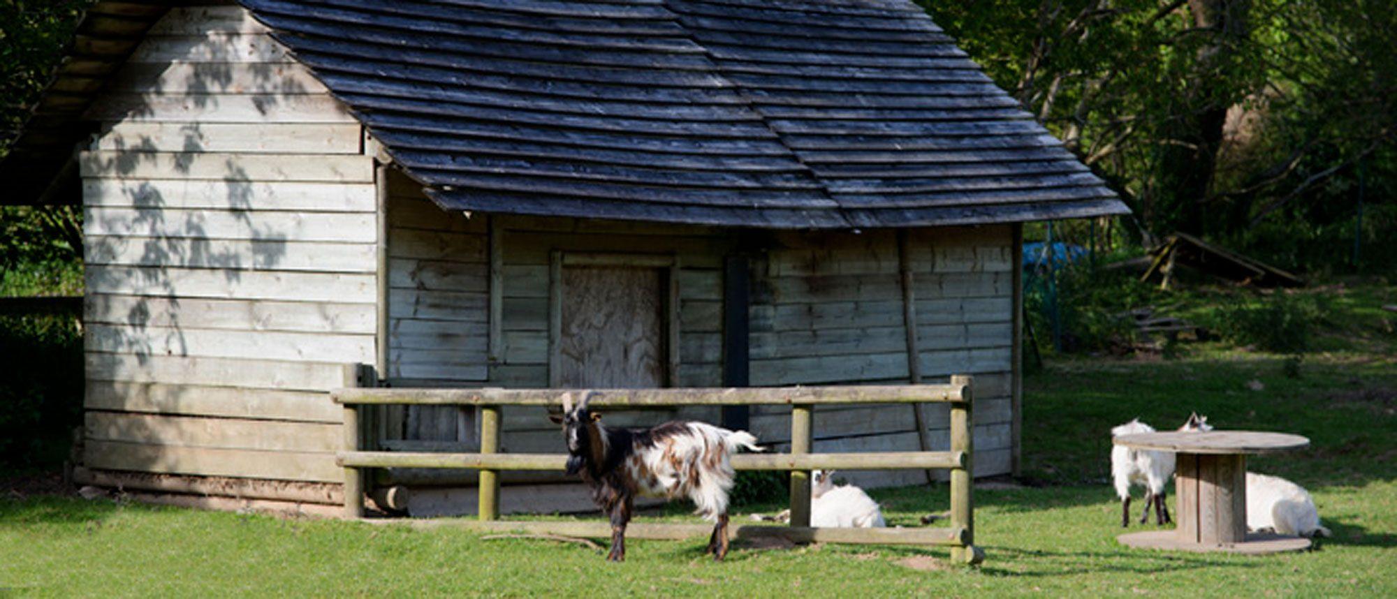 Parc en Bretagne animation pour les petits : la mini ferme